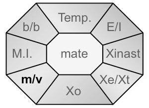 Xident-mv